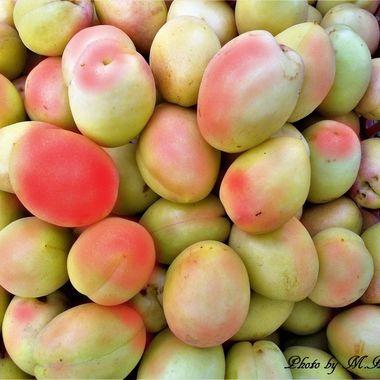Picking out apricot as big as a big egg, Karaj 2011. Wonderful.