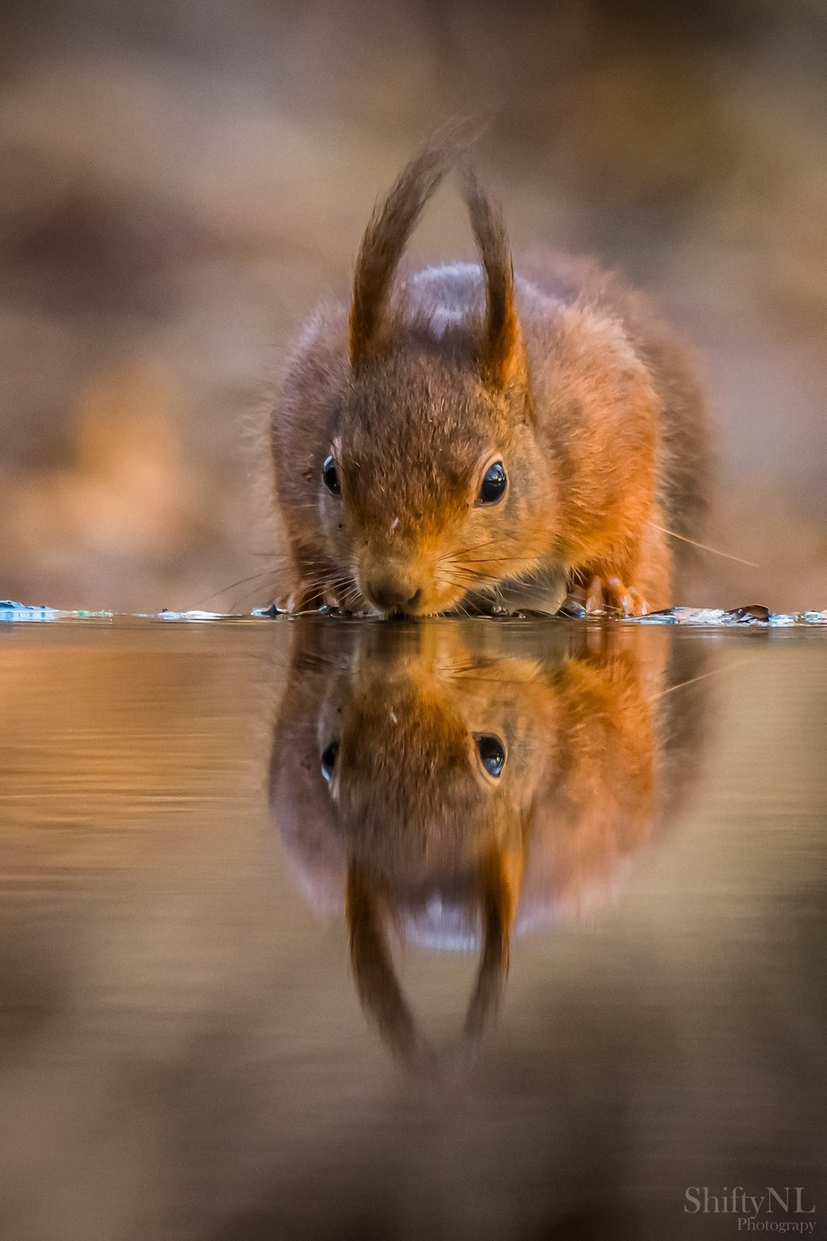 """Mirror"" by Rense_Sjoers - Small Wildlife Photo Contest"
