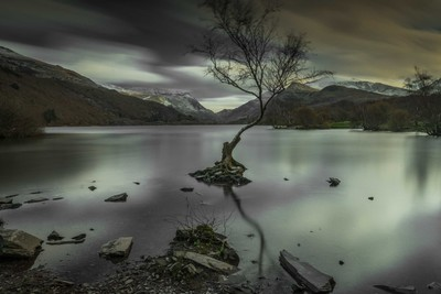 the lone tree at llanberris (10 stop)