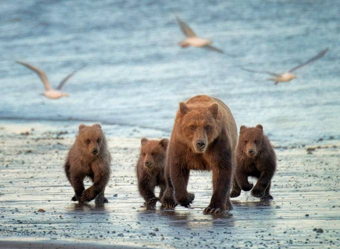 mom and 3_DSC1198-Edit by lorilabrecque - Bears Photo Contest