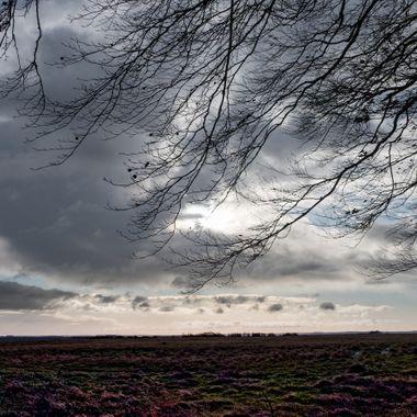 Sky and Tree.