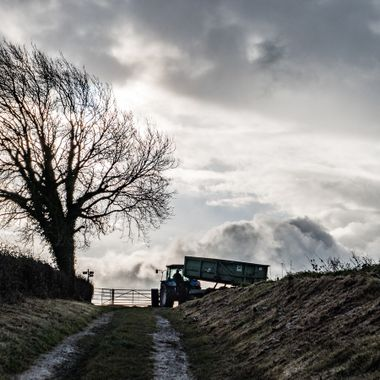 Tractor and tree.