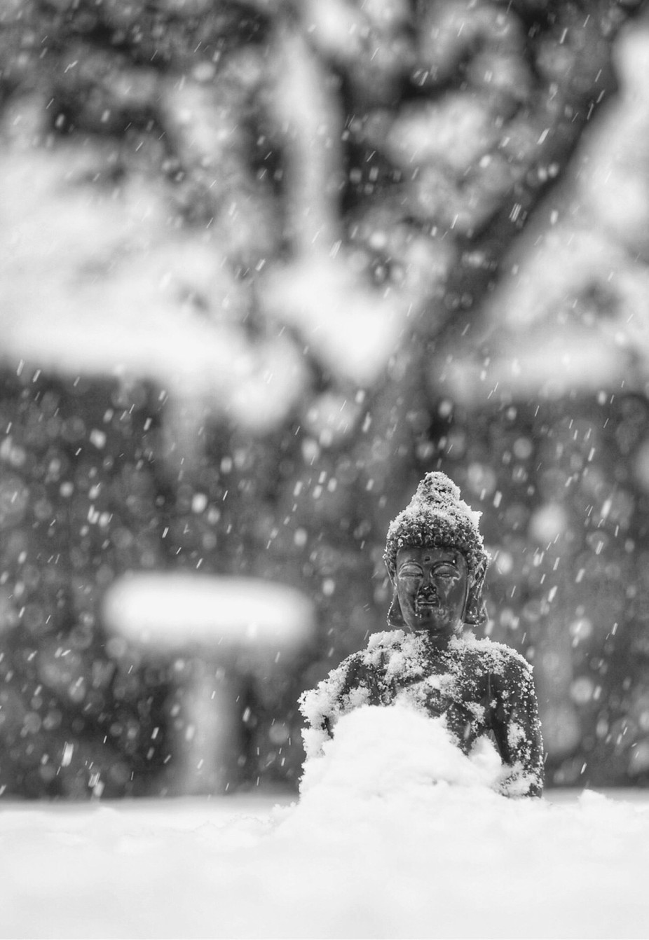 """silence in the snow""  by StephenLittlePhotography - Zen Photo Contest"