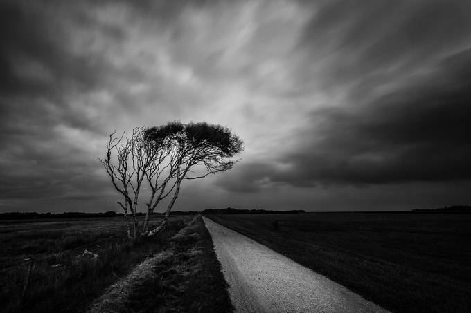 The tree by hfuchs - Black And White Compositions Photo Contest vol2