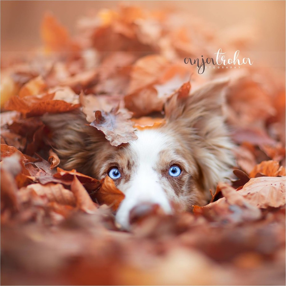 Hide and seek by jollyvicky - Only Pets Photo Contest