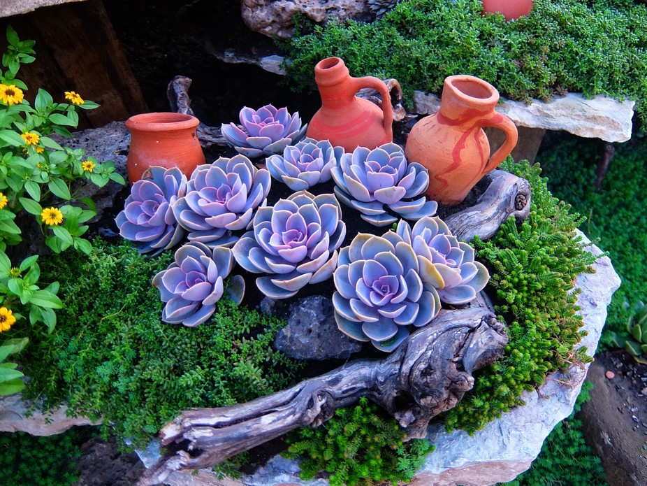 Succulents in a wonderful garden