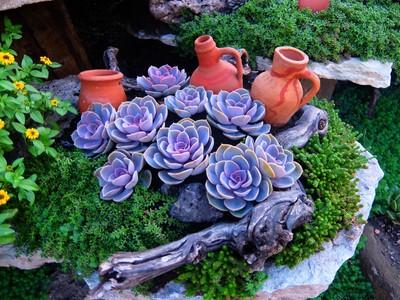 Succulents in a wonderful garden