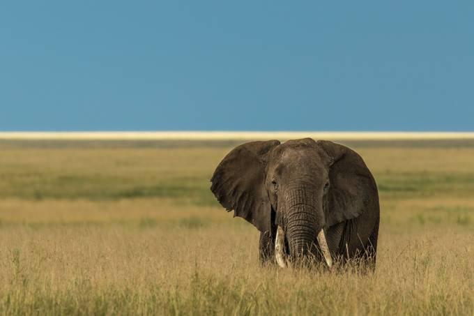 Tusker by vladcech - Isolated Photo Contest