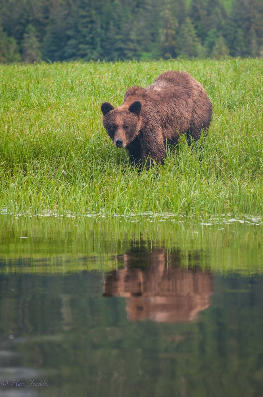 Sub-adult male grizzly bear by huwddu - Social Exposure Photo Contest Vol 13