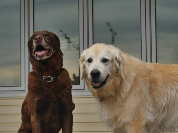 Rollo & Henry