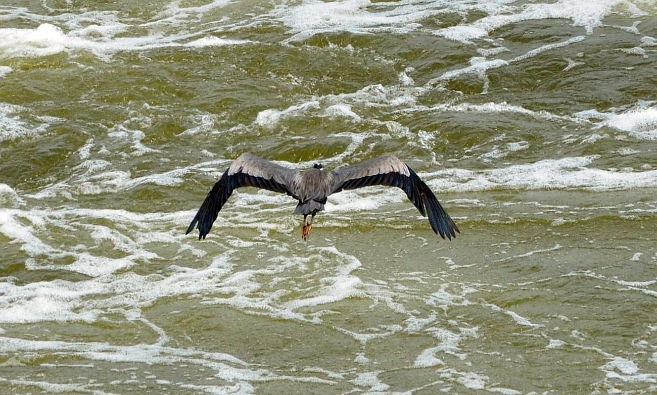 Great Falls National Park, Great Falls, Virginia Mather Gorge, Potomac River,