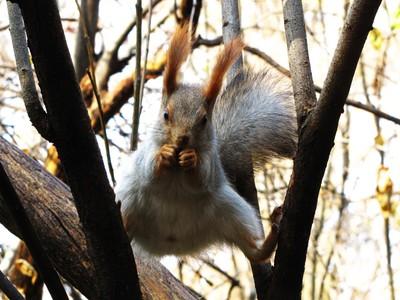 karate squirrel