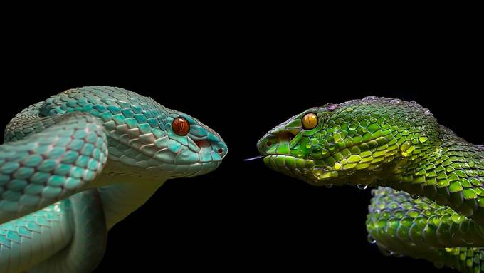 Wet Vs Dry by ance87 - Snakes Photo Contest