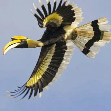 captured in flight, khao sok national park thailand