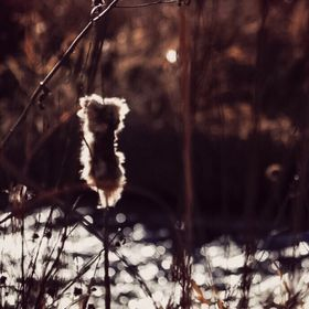 """Tattered cattail tufts; sway in a chilly breeze; we fish for supper."" Patricia Sawyer"