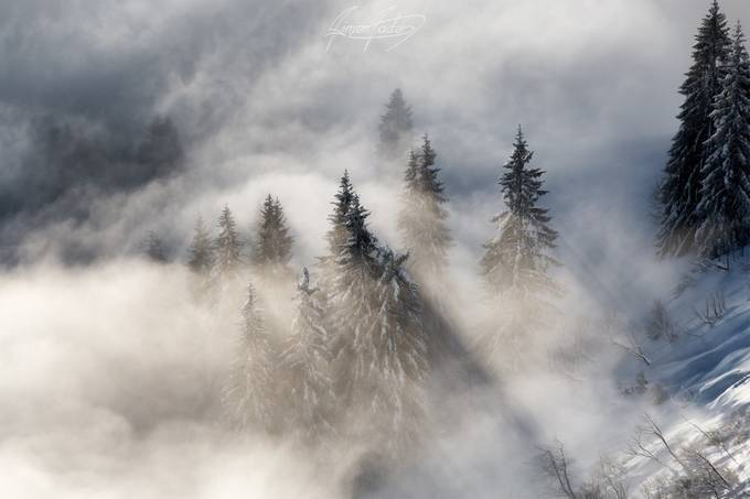 'Pinetrees in Fog' by Simon_Bader