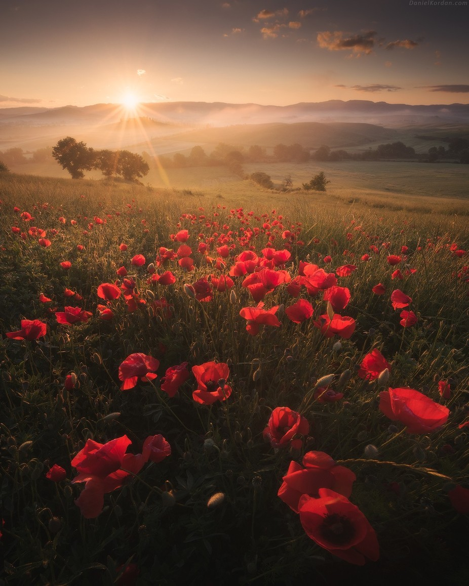 Poppies by DanielKordan - It Is Red Photo Contest
