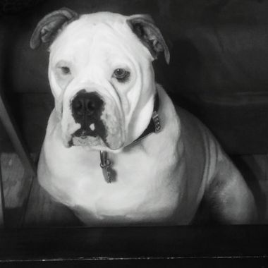 Chubbs in black and white