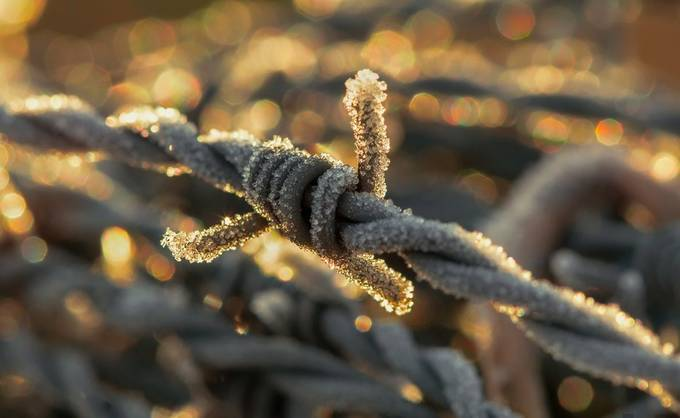 barbed wire by runeaskeland - Everything Bokeh Photo Contest