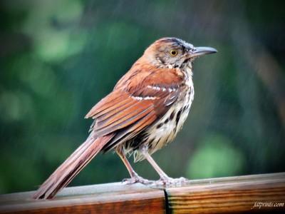 Wet Thrasher