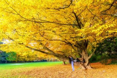 Under tree