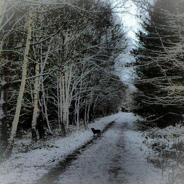 Seasonal walks