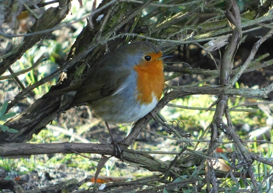 This one we call 'Fluffy' because last year its feathers were a bit of a mess. ...