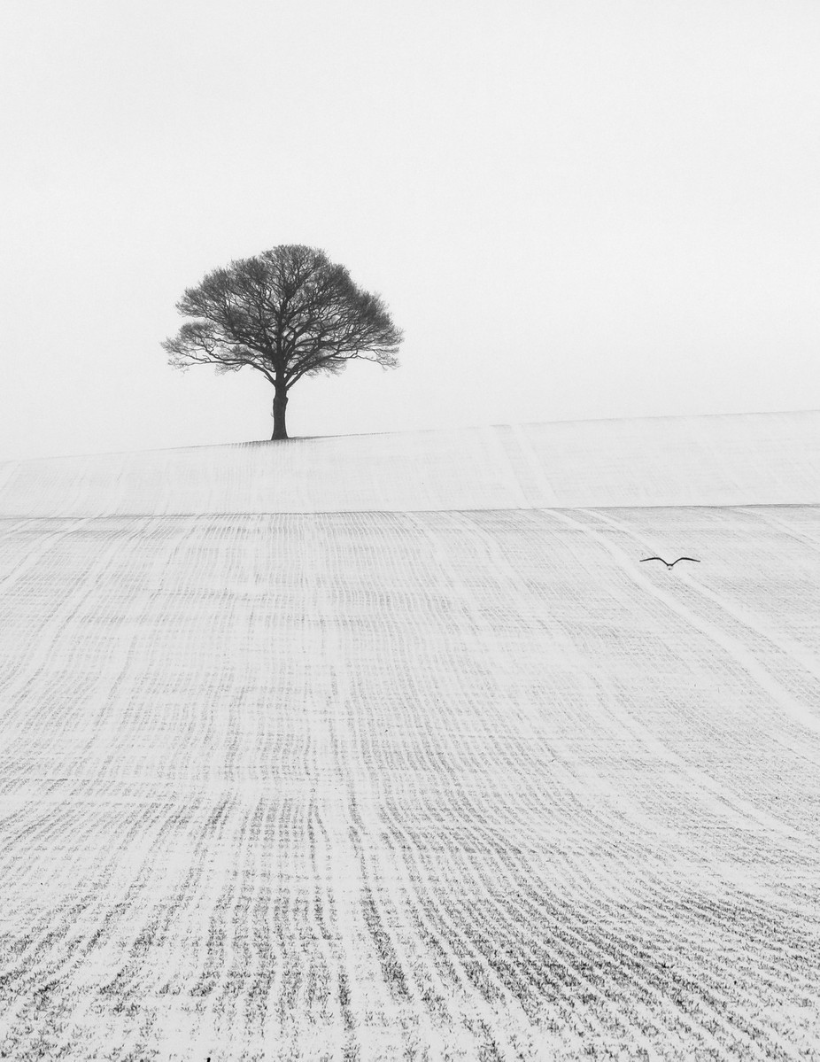 Solitary in the Snow by jaybirmingham - Patterns In Black And White Photo Contest