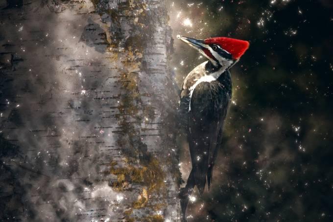 woodpecker by nancyzavaglia - Covers Photo Contest Vol 43