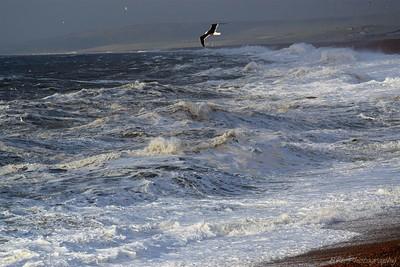 Angry Sea at Chesil Cove Portland