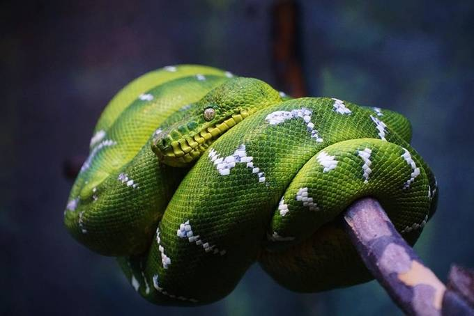 green snake by mrw1288 - Snakes Photo Contest