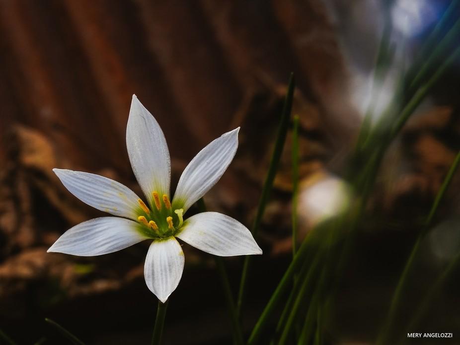 """Estaba ahí, en la orilla del río, esta planta salvaje, conocida como """"yuyo sapo&qu..."""