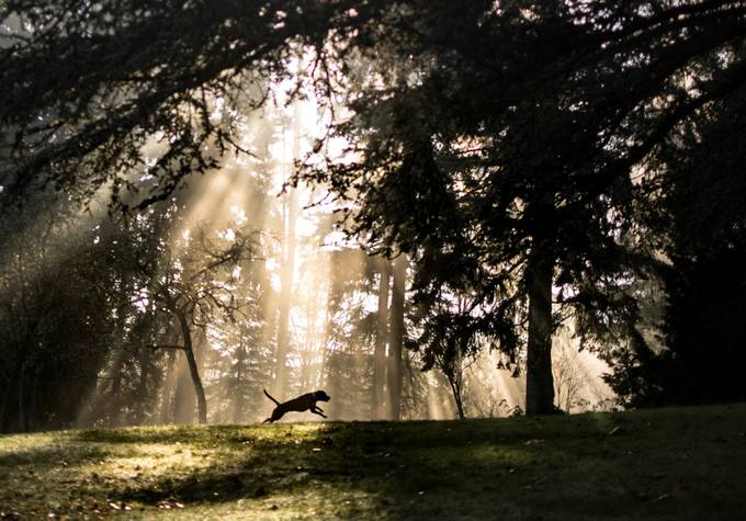Light Rays pooch by freeser56 - Monthly Pro Vol 37 Photo Contest
