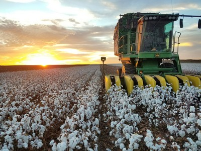 Cotton sunset