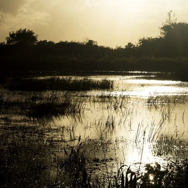 Everglades in late afternoon sun