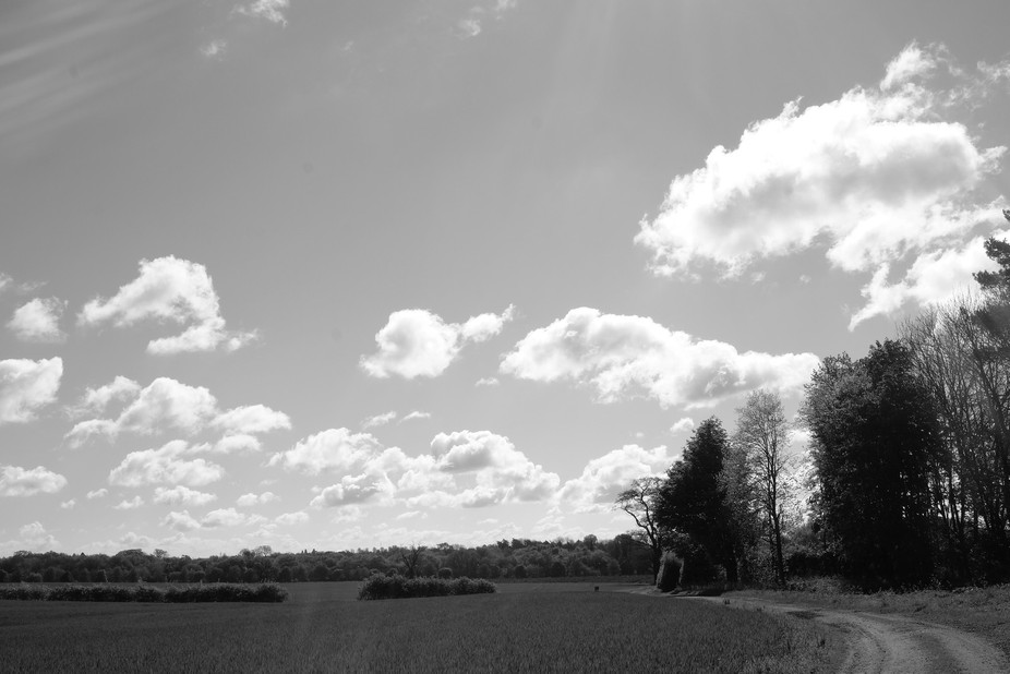 a glorious spring sky seen over the fields and trees on a local farm