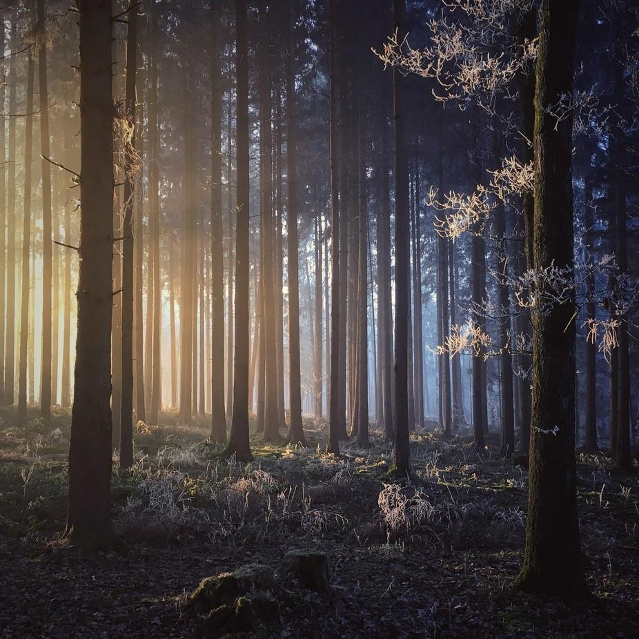 Illumination by Mariko - Covers Photo Contest Vol 43