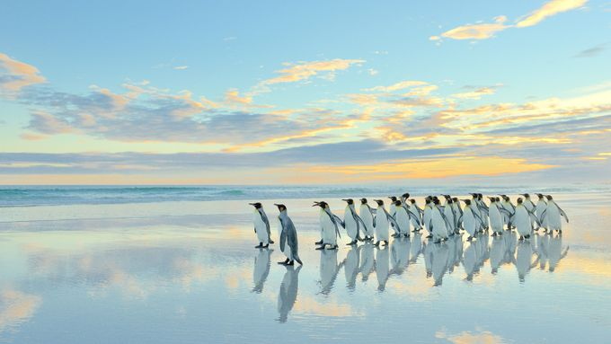 The march of the penguins by lmr337 - Wildlife And Water Photo Contest