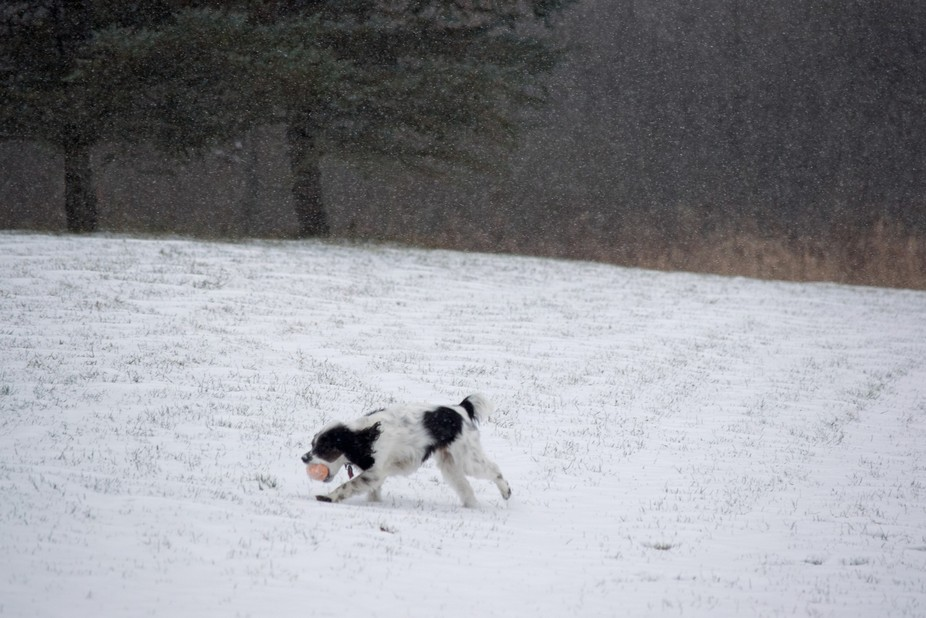 Playing fetch with my dog Bella in the beginning of a snowstorm.