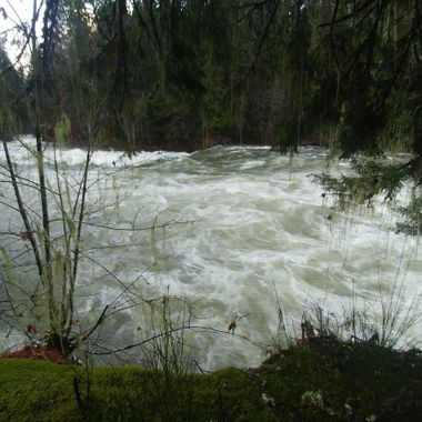 Stamp River Raging in Port Alberni on Vancouver Island - afternoon of 20171126