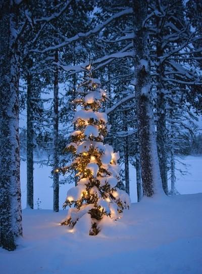 Christmas Tree 0494-2