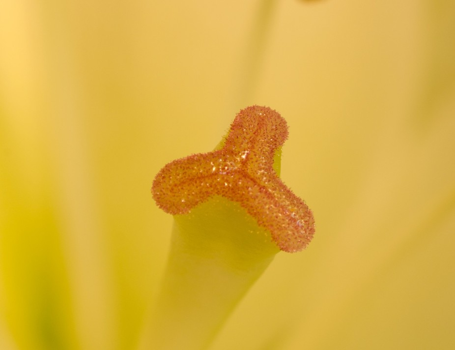 Lilly Pollen Stack