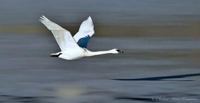 Flight Over Frozen Pond
