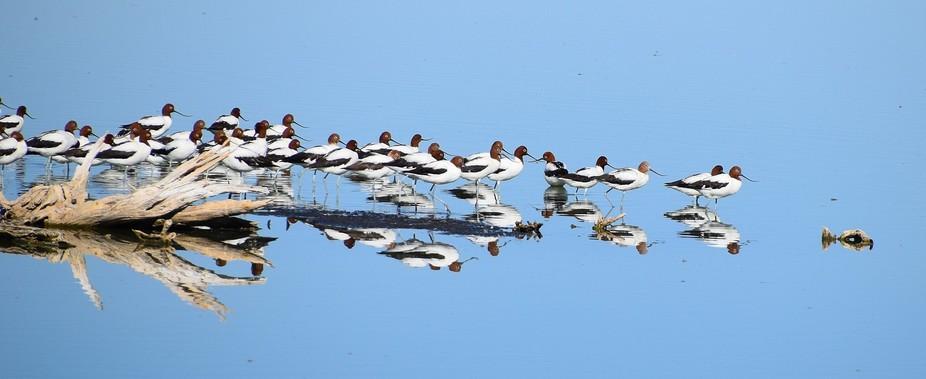 Alice Springs Ponds