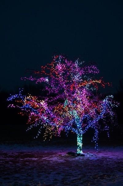 The Lees Summit Magic Tree