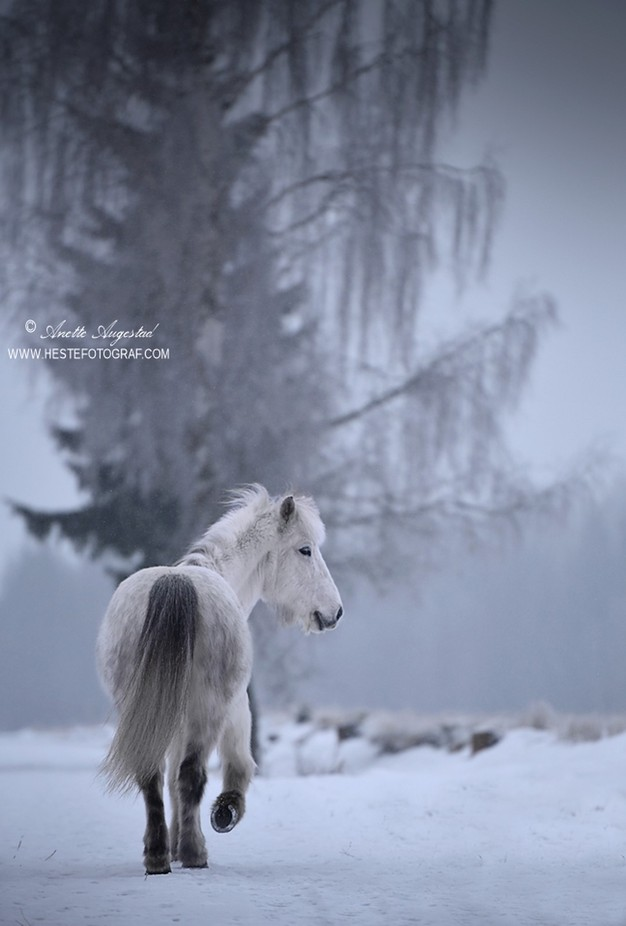 Magic Winter by Hestefotograf - Social Exposure Photo Contest Vol 13