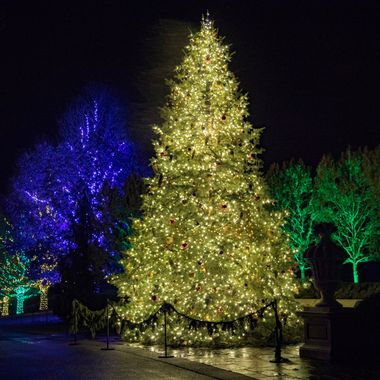 Night lights at Longwood Gardens, the colors of Christmas.