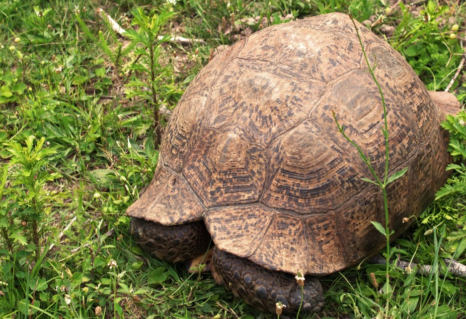 Found this big guy on the side of a path while on a nature walk - seemed like he wanted to play h...
