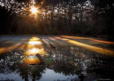 Beautiful Scum Pond