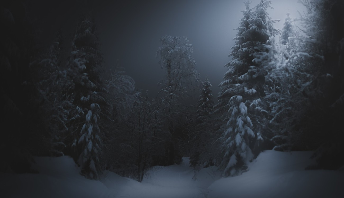 Dark Forests Photo Contest Winners
